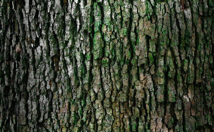 Ładny i {schludny zieleniec to nie lada wyzwanie, szczególnie jak jego konserwacją zajmujemy się sami.